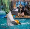 Дельфинарии, океанариумы в Грахово