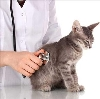 Ветеринарные клиники в Грахово
